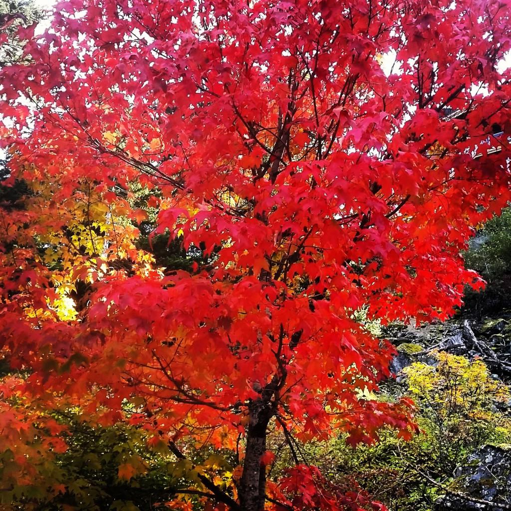 Admiring the fall colours, it's not all mountain bike coaching!